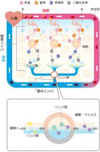 リンパケアイメージ図